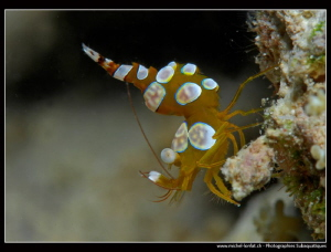 Thor Shrimp... :O)... by Michel Lonfat